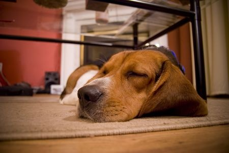dogs-and-pets-carpet-cleaning